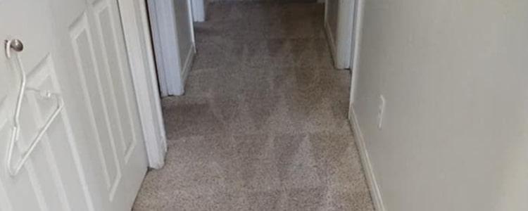 Common carpet problems